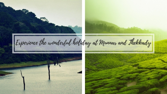Best Things to do in Munnar Thekkady