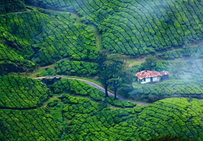 3-nights-4-days-munnar-alleppey-houseboat