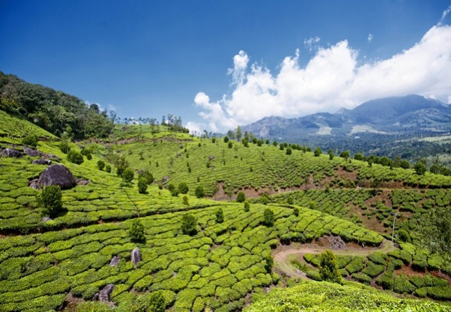 6 Nights 7 Days Cochin Athirappally Munnar Thekkady Alleppey Houseboat Kerala tour Packages
