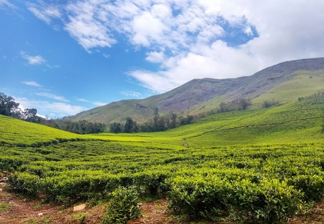 3 Nights 4 Days Munnar Houseboat Kerala Tour Packages