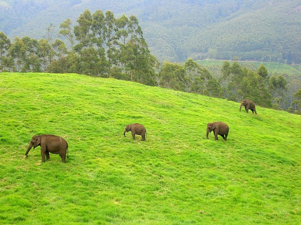 4 Days Munnar Adventure Tourism