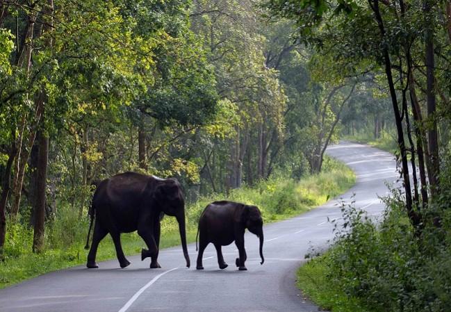 3 Nights 4 days Calicut Wayanad Kerala Tour Package
