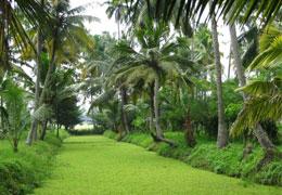 2-nights-3-days-munnar-thekkady-kerala-tour-package